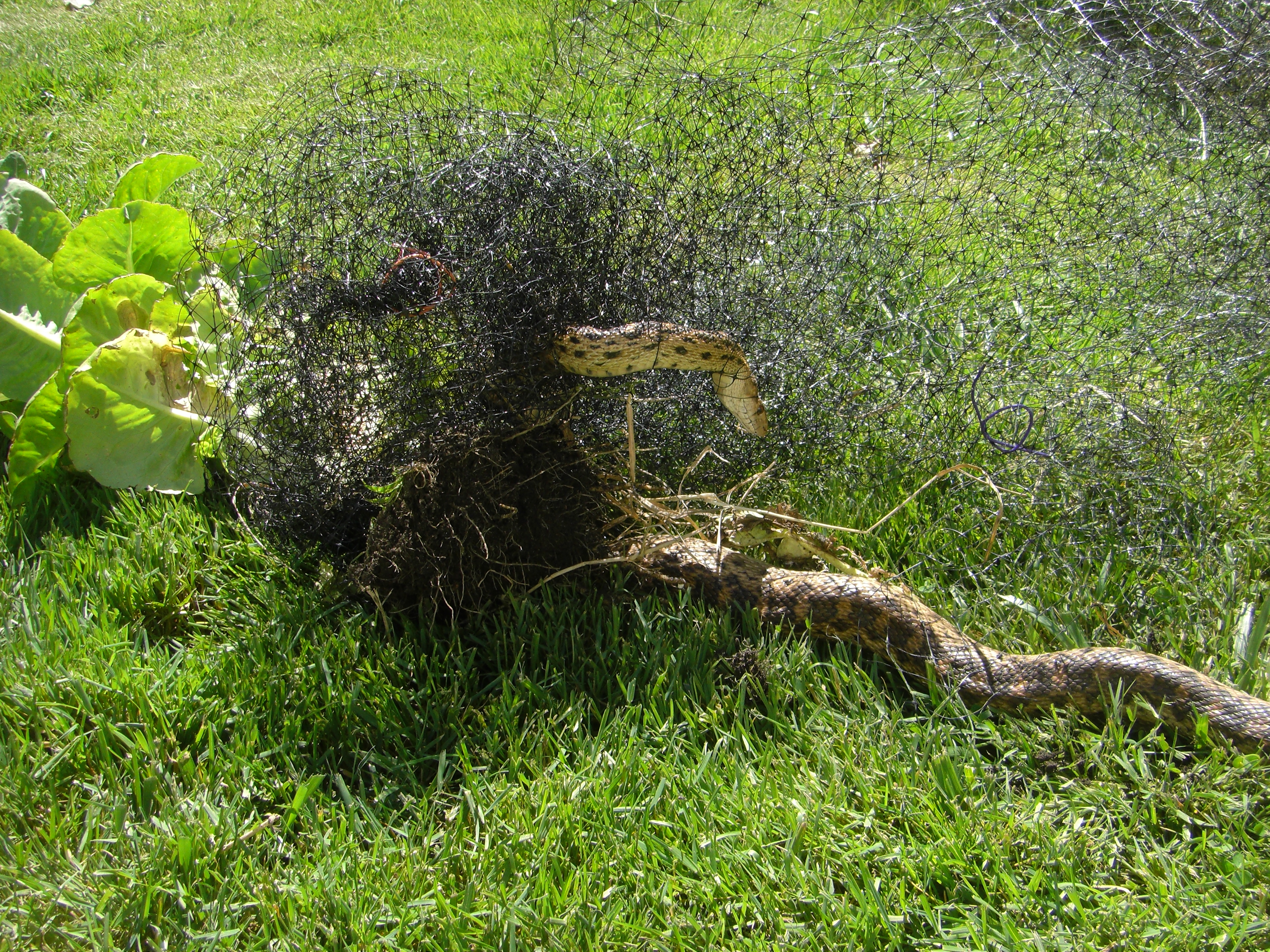 How To Keep Deer Out Of My Garden Deer Proof Your Garden And Yard Naturally Pest Control What